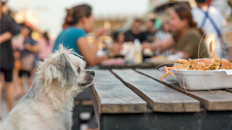 Excited dog looking at shrimp at North Carolina seafood restaurant